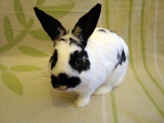 Extrem Les lapins nains | Lapins | nac et oiseaux IR53