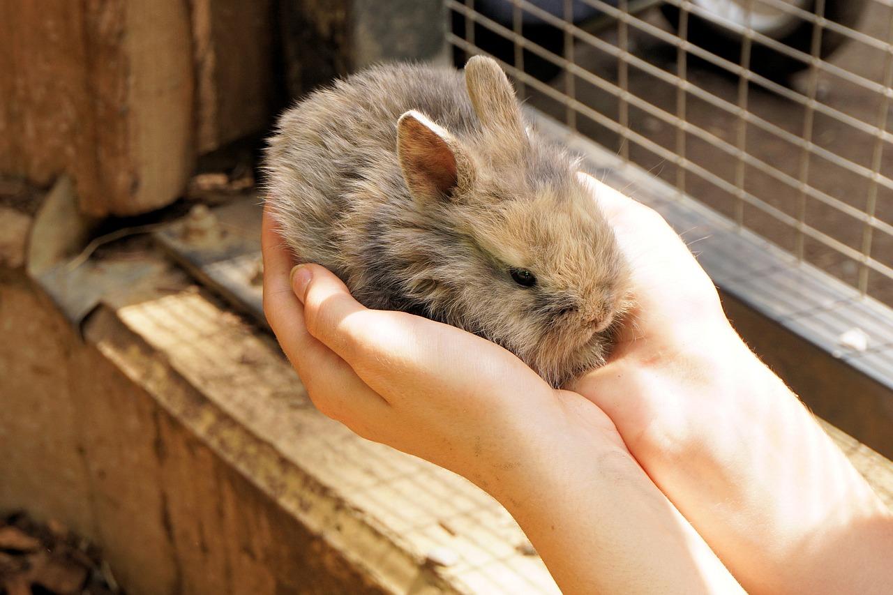 Maladies et vaccination des lapins